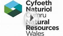 Natural Resources Wales / Jobs